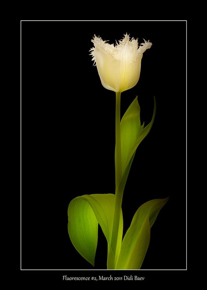 Fluorescence #2 by didibaev