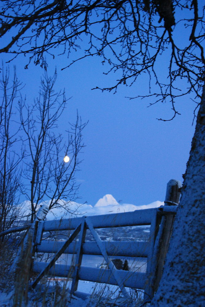 IMG_2416 by Balsfjord