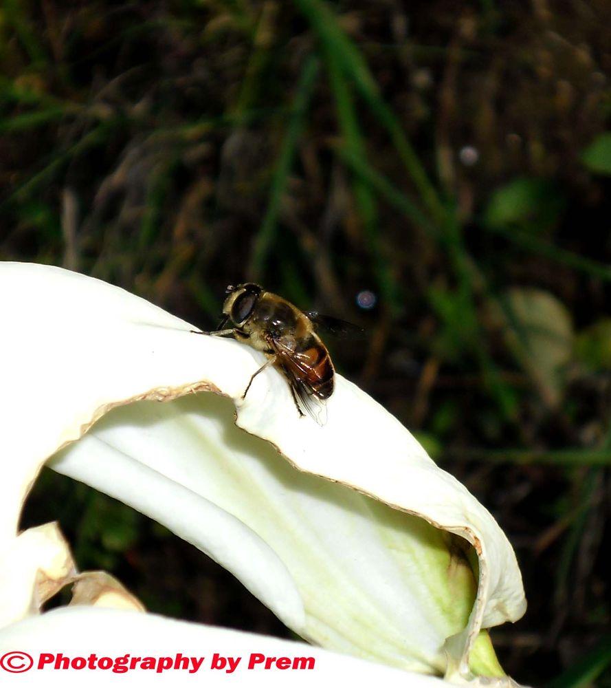 honey bee 2 by premkumar