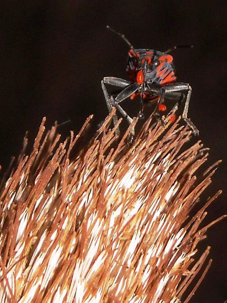 Bugs by Bogoljub