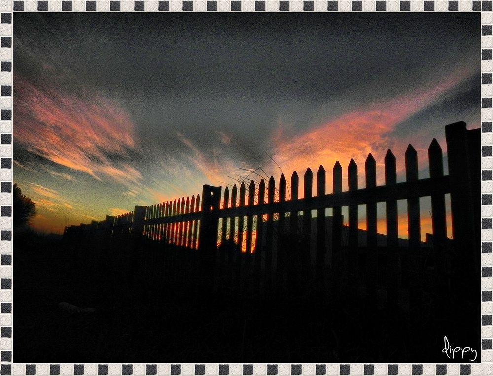 Detrás de la valla... by dippy