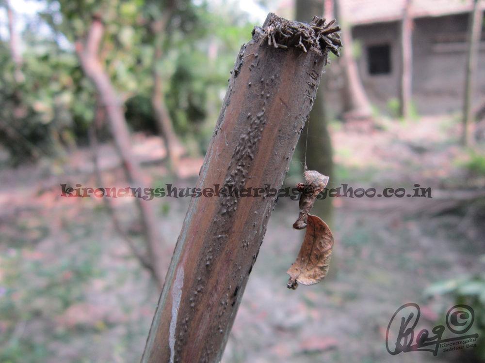 dry beauty by Kironangshu Sekhar Bag