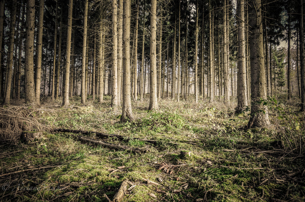 Enchanted forest by AdiY