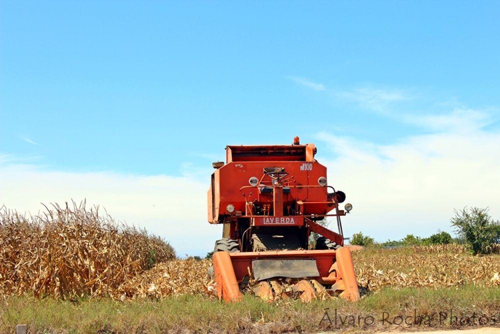 Harvester  by AROCHA