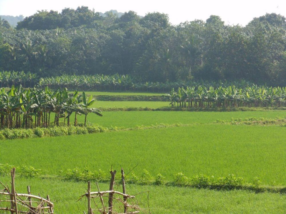crop by udaykumar