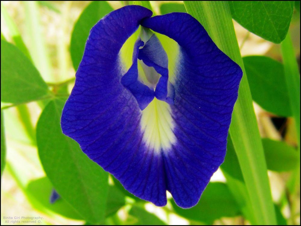 Flowers by binitagiri
