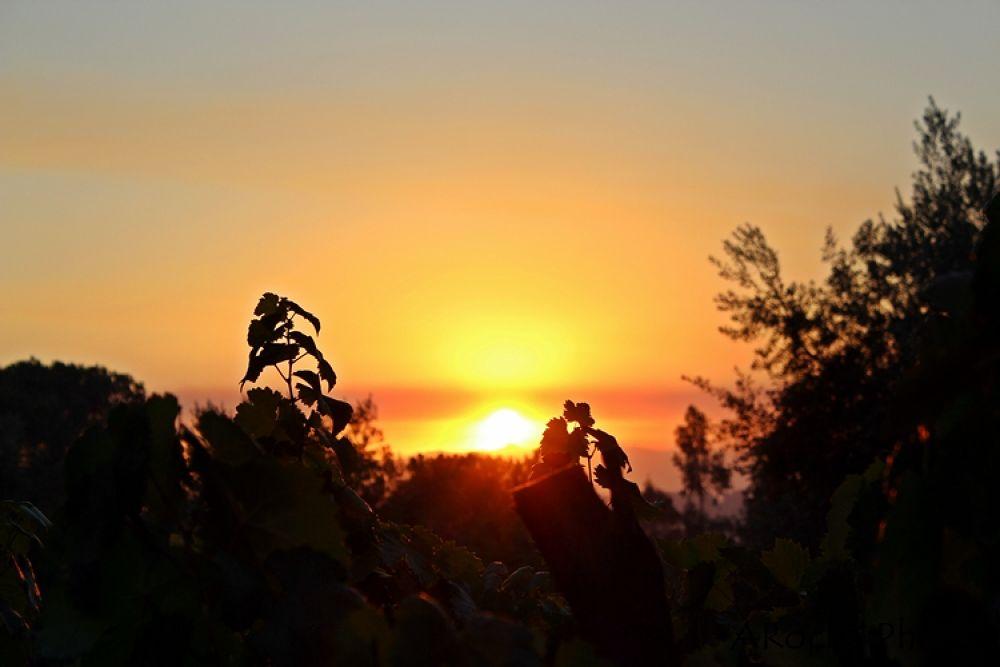 Sunset by AROCHA