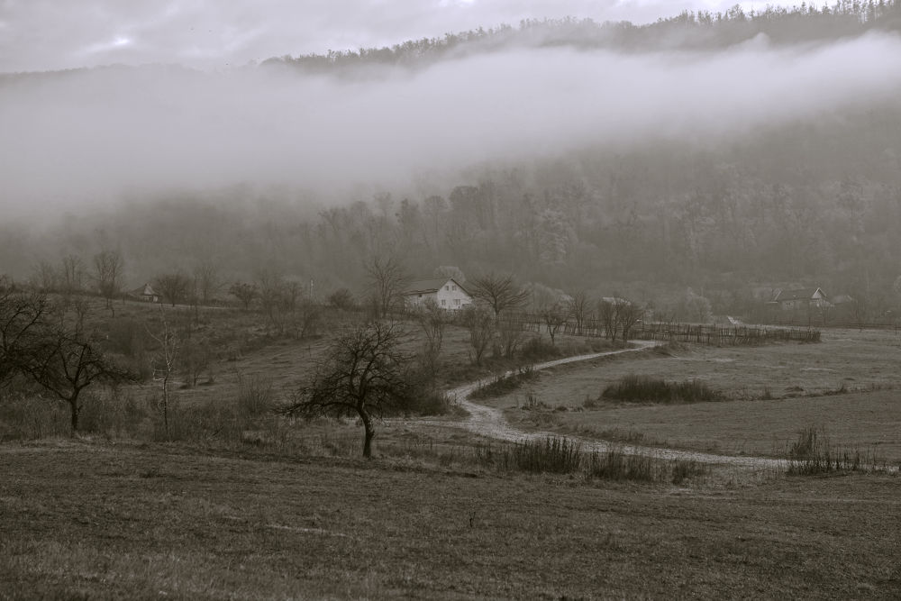 In the fog by cito