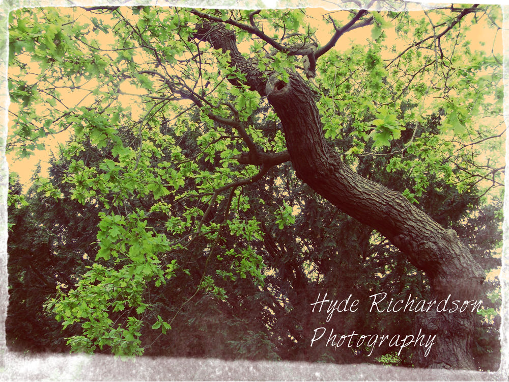 https://www.facebook.com/pages/Hyde-Richardson-Photography/109806369201334 by hyderichardson