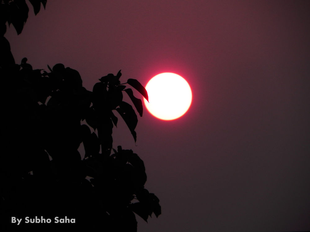 DSCN1194 by Subho Saha