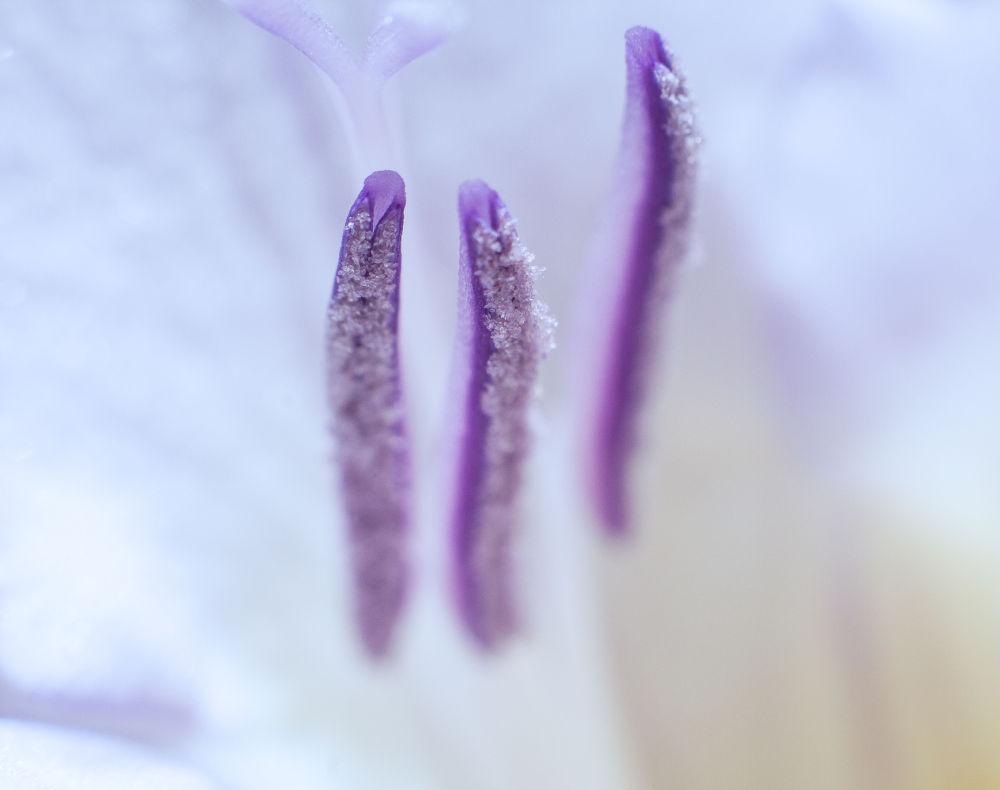 Voglia di primavera by DanieleFusco
