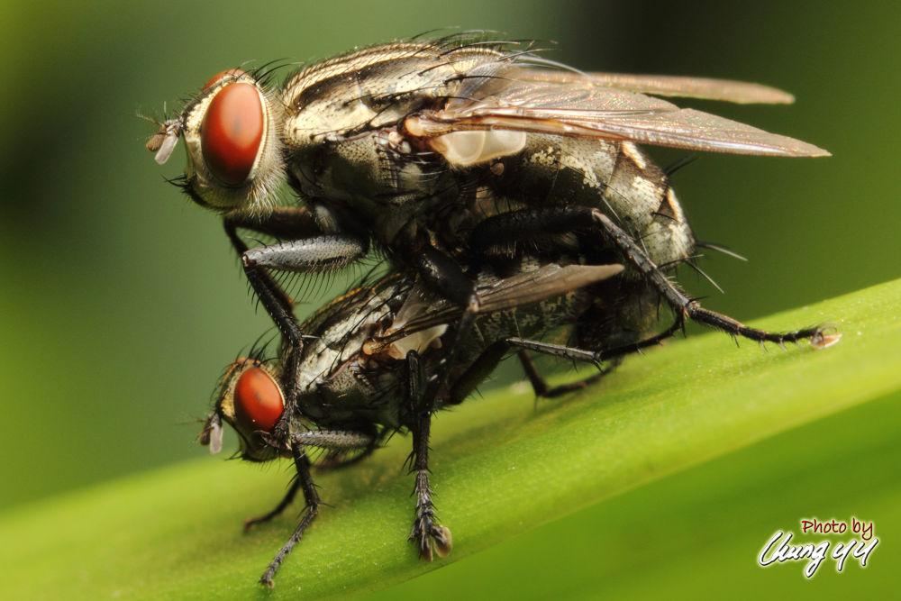 Fly 苍蝇 by cyy4993