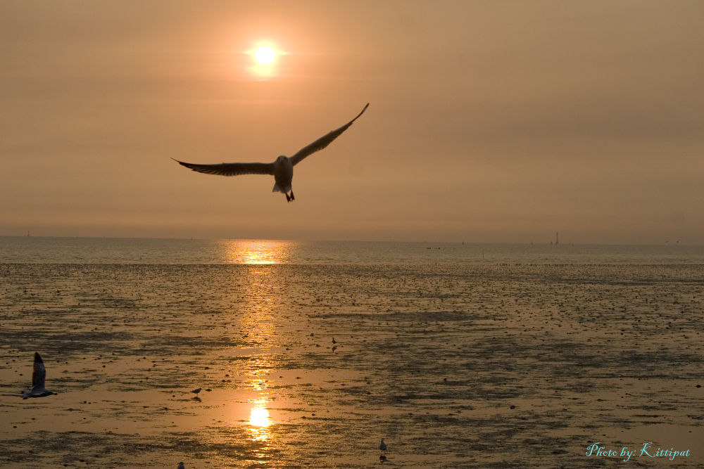 Seagull_3 by kittipatboonchim
