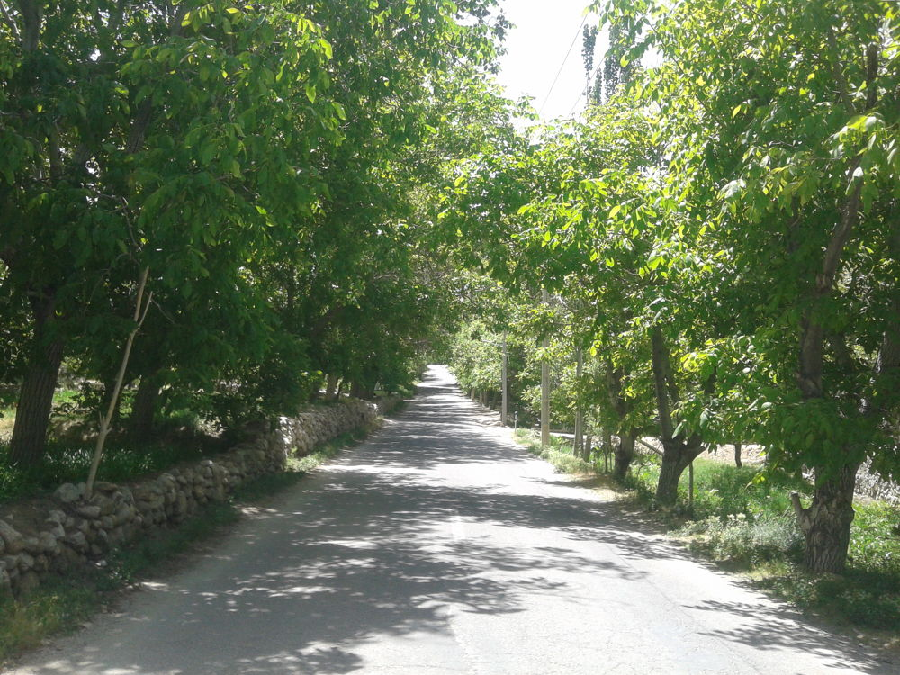 Road in summer by nkargar1356