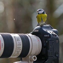 MickiPhoto