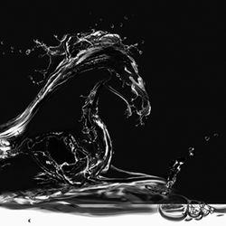 blackstallionphotography
