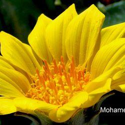 mohamedfarouk54738