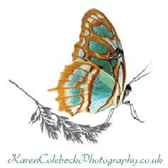karencolebeckphotography