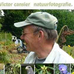 Victor Cansier