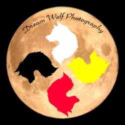 Dream Wolf Photography